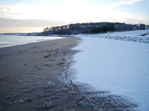 Crawfordsburn Park Snow (2)