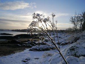 Crawfordsburn Park Snow (3)