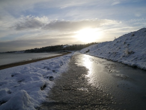 Crawfordsburn Park Snow (5)