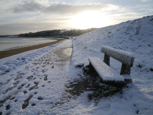 Crawfordsburn Park Snow (6)
