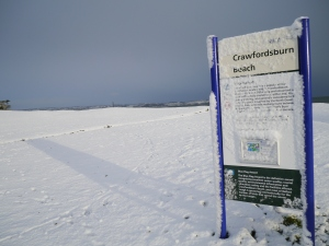 Crawfordsburn Park Snow (7)
