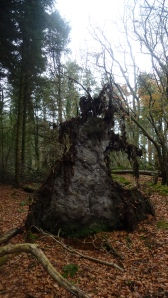CREIGHTONS WOOD NOV 14 (11)