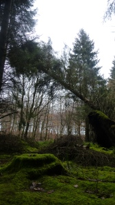CREIGHTONS WOOD NOV 14 (5)