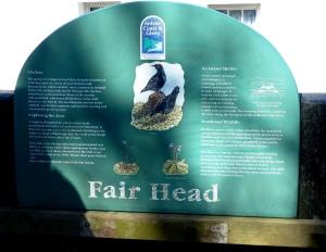 fair head (2)