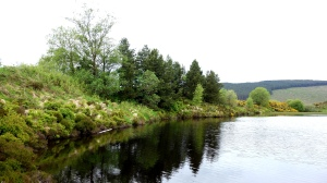 gortin forest lakes (12)